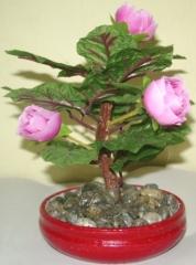 Bonsai Mawar Merah Muda