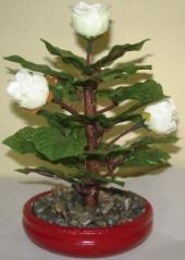 Bonsai Mawar Putih